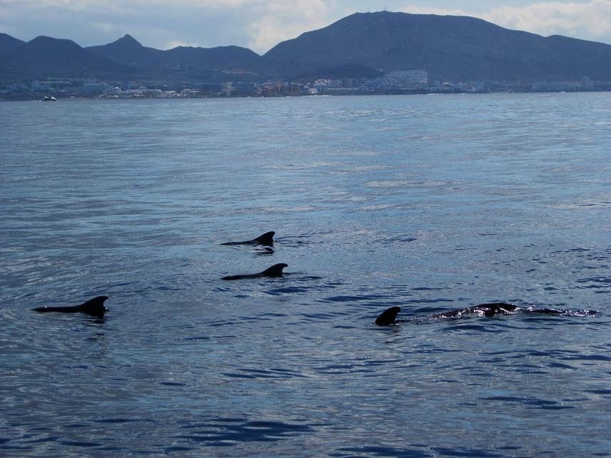 Tenerife 013.jpg